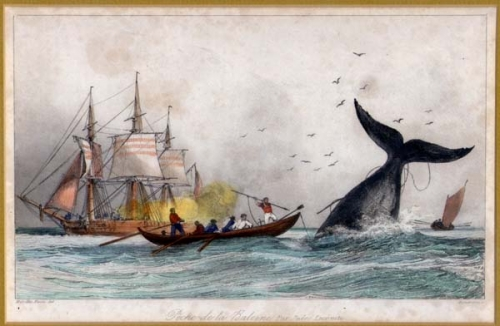 walvisjacht.jpg