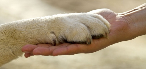mediation-animale_chien_chat_catedog-1248x588-1248x588.jpg