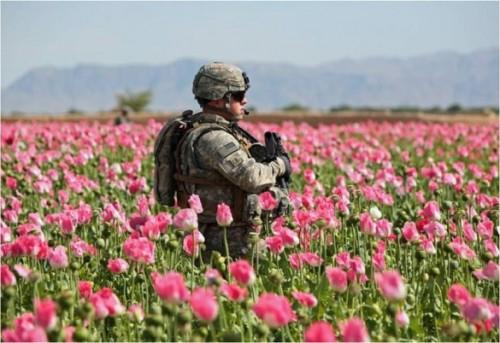 afghanistan-opium1.jpg