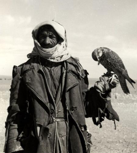 falconsSA.jpg