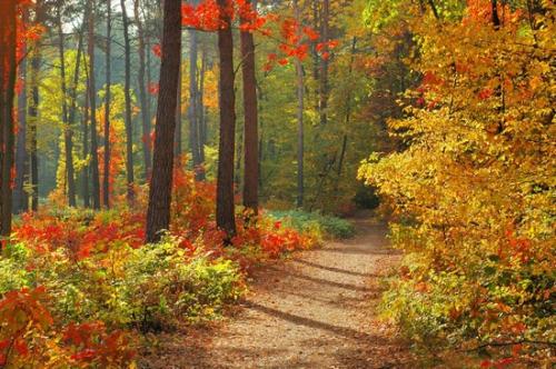 fo1311844-Forêt.jpg