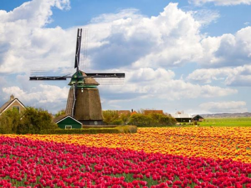 Pays-Bas-Hollande-moulin-tulipes-.jpg