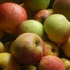 pommes1.jpg