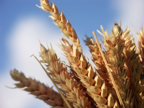 cerealesmoscou.jpg