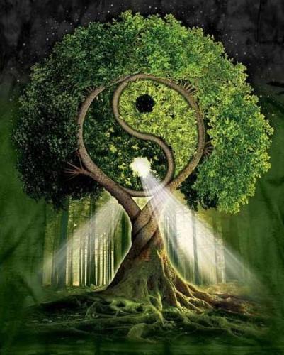 yin-yang-tree.jpg