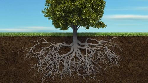 arbre-racines.jpg