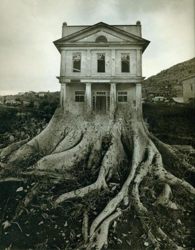 Roots-weird-24779818-1005-1287.jpg