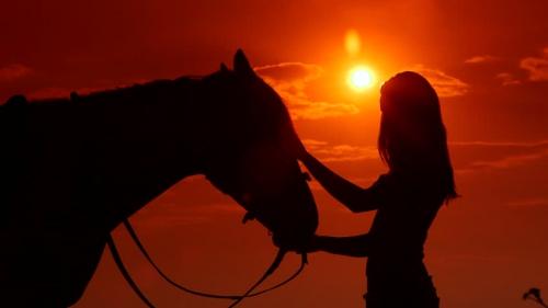 horsesun.jpg