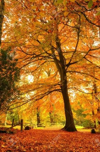 8560677-mooie-herfst-herfst-bos-scã¨ne-met-levendige-kleuren-en-uitstekende-details.jpg