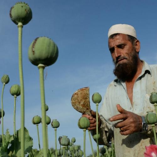 141117-opium-afghanistan.jpg
