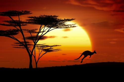 kangourou-coucher-de-soleil-australie.jpg