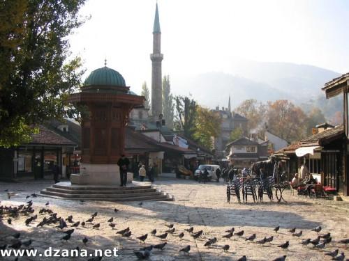 sarajevo-place-pigeons-360.jpg