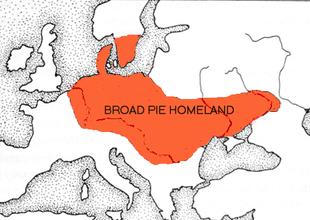 310px-Broad_Homeland_Kilian.png
