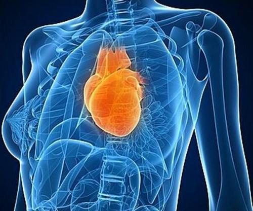 anatomie du coeur sante tunisie.jpg
