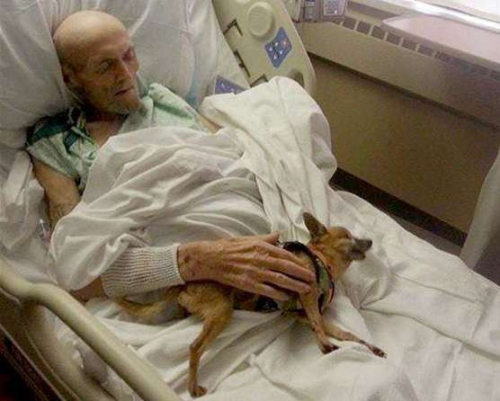 2D274907016812-today-dog-hospital-141016-01.blocks_desktop_medium-e1413805697520.jpg