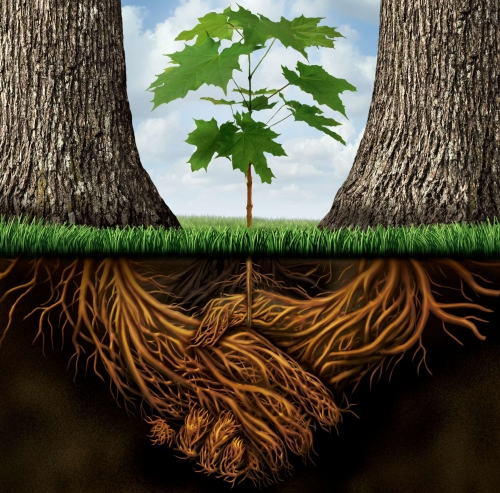 racines1.jpg