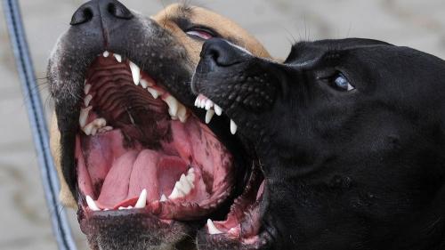 des-prelevements-genetiques-effectues-sur-67-chiens-pour-identifier-les-animaux-ayant-attaque-une-femme-enceinte-samedi-dans-l-aisne-devront-etre-analyses-pendant-plusieurs-jours_6233394.jpg