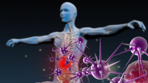 humain-systeme-immunitaire-representation-artistique.jpg