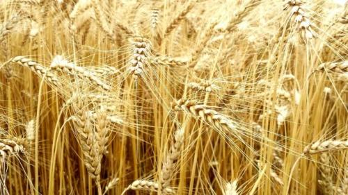 céréales-696x392.jpg