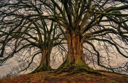 tree-3097419_pixabay-770x500.jpg