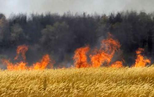 wheat-field-2.jpg