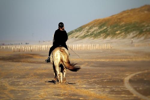 horse-4785043_960_720.jpg