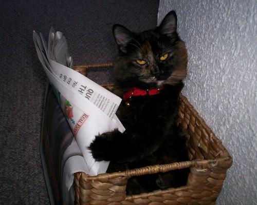 cat478467570_e5de507bdd_z.jpg