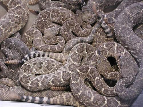 SnakePile.jpg