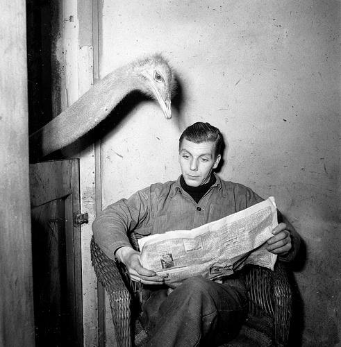 ostrich-newspaper.jpg