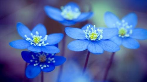 romantik-blaue-blume-540x304.jpg