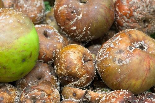 rotten-apples.jpg