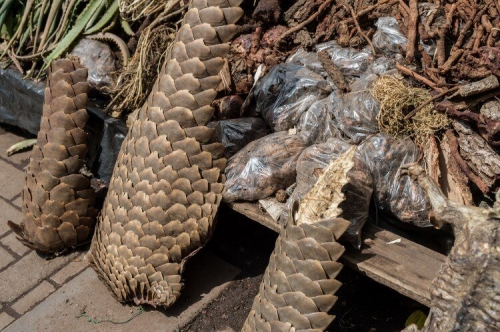 Pangolin-tails-for-sale-at-a-Muti-market-We-animals.jpg