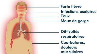 grippe-aviaire-pandemie1.jpg