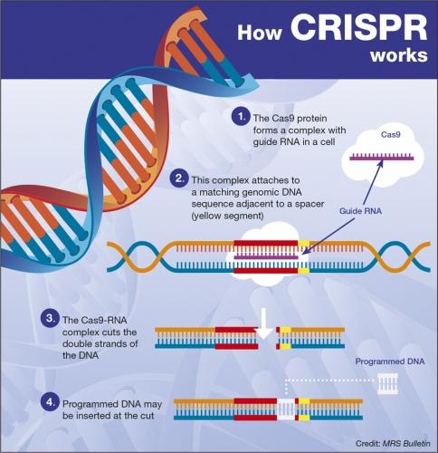 CRISPR-1.jpg