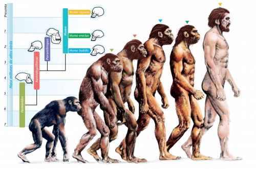 evolution-of-humans.jpg