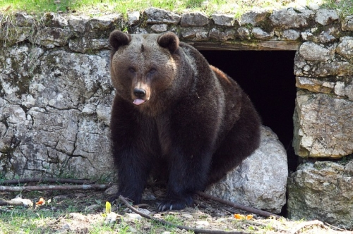 brown-bear-514389_640.jpg