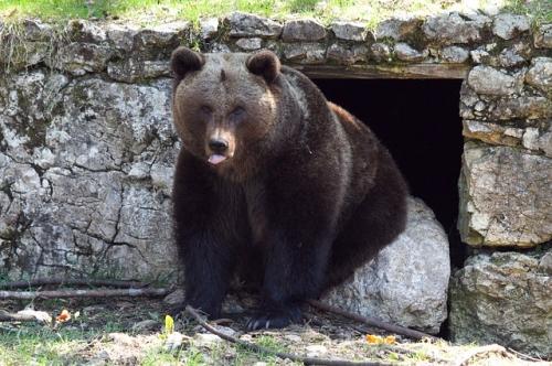 brown-bear-514389_640.jpg